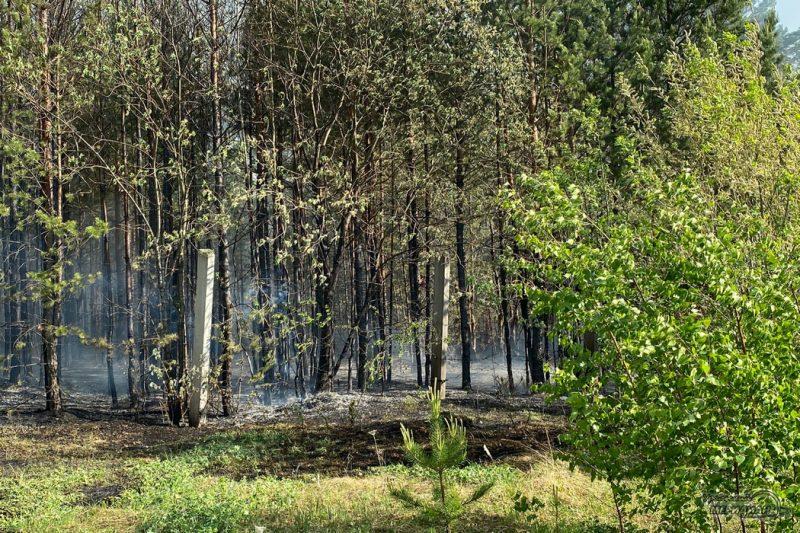 Лесной пожар дым забор