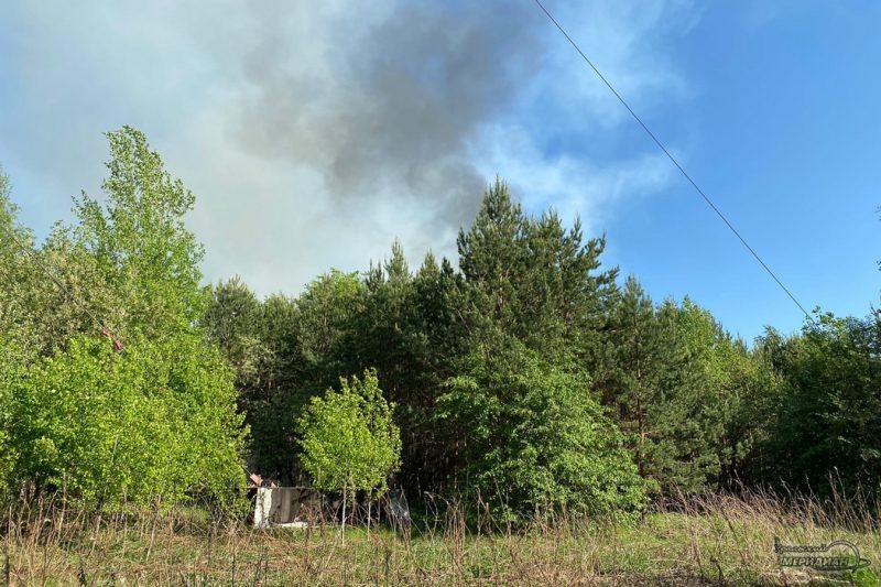 Пожар в лесу дым гарь деревья