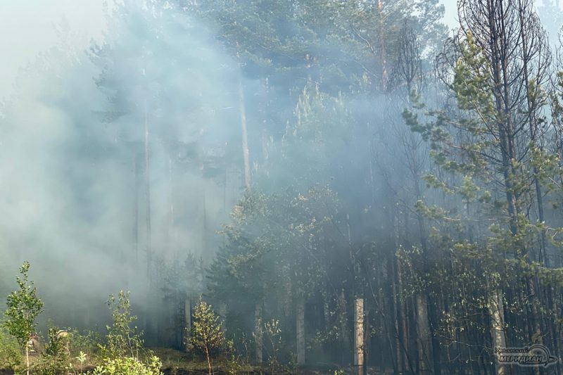 Леной пожар дым деревья