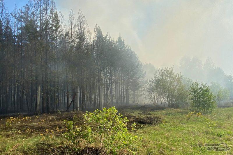 Лесной пожар дым гарь забор