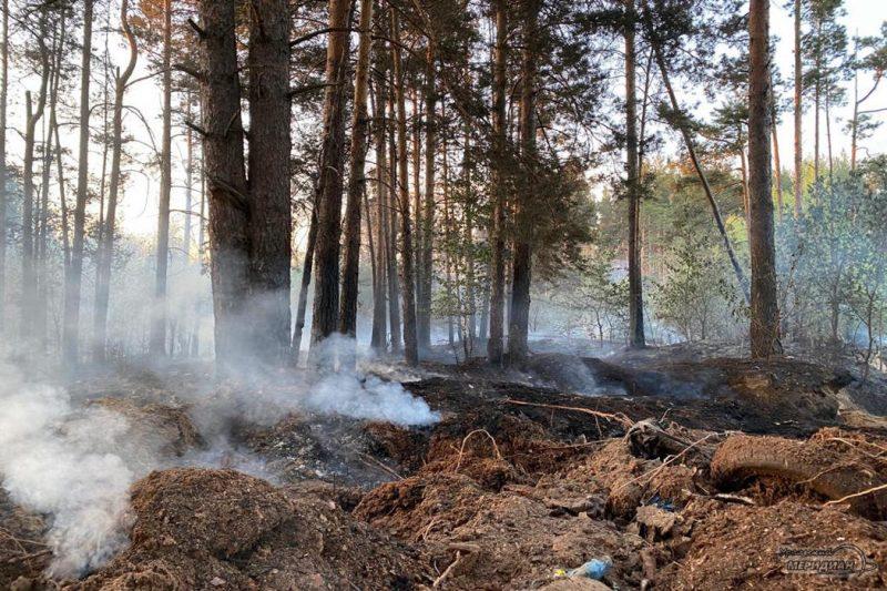 Пожар в лесу дым гарь
