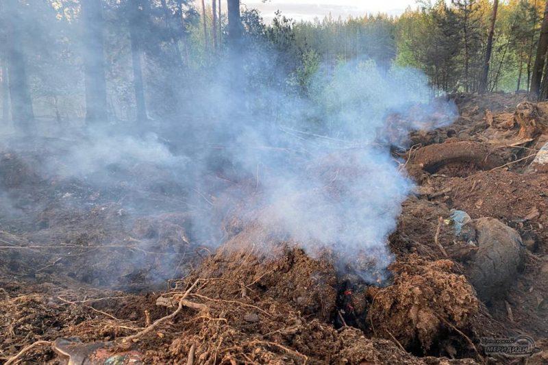 Пожар в лесу дым