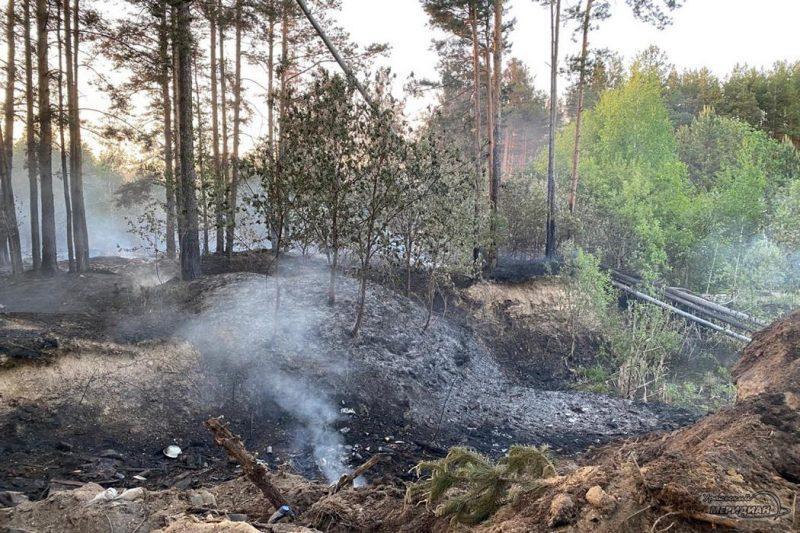 Лесной пожар тление гарь дым
