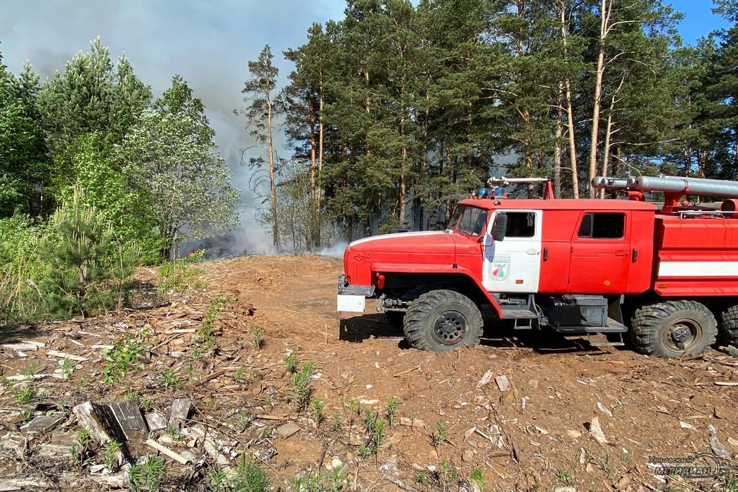 Четыре лесных пожара возникло в Тюменской области за сутки