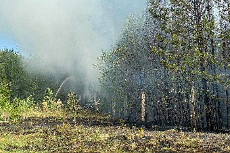 Тушение лесного пожара мчс забор