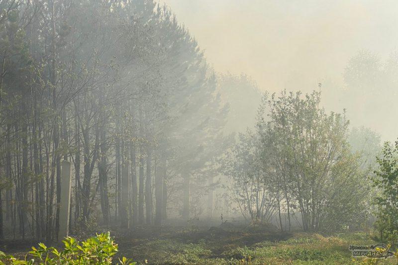Лесной пожар дым смог