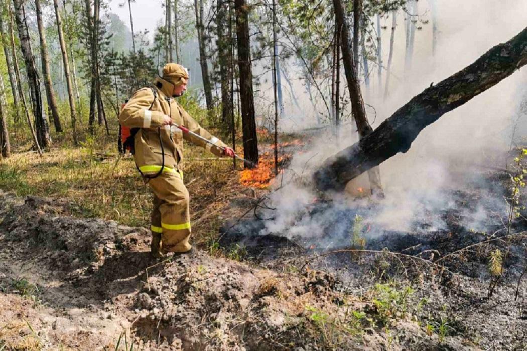Пожар + лес горит + пожар в лесу + пожарные + ранец + ранцевый огнетушитель