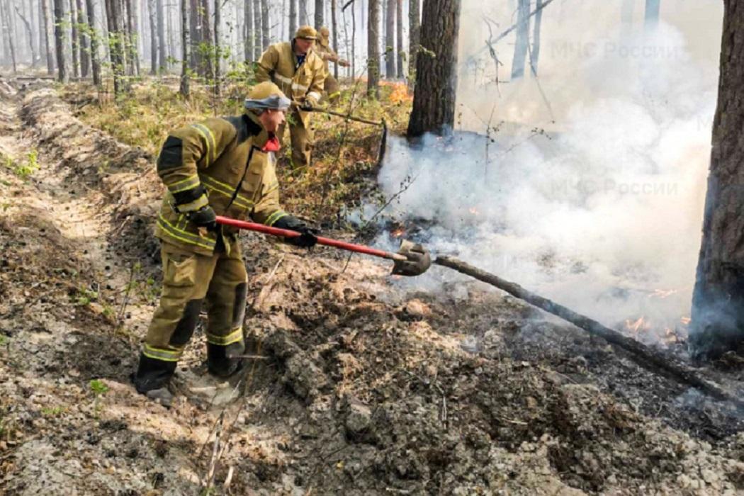 ушение пожара + лес горит + пожар + пожарные + пожар в лесу