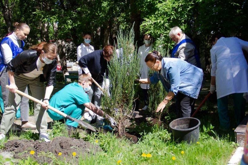 В ОКБ №1 Тюмени высадили более 20 деревьев и кустарников 1