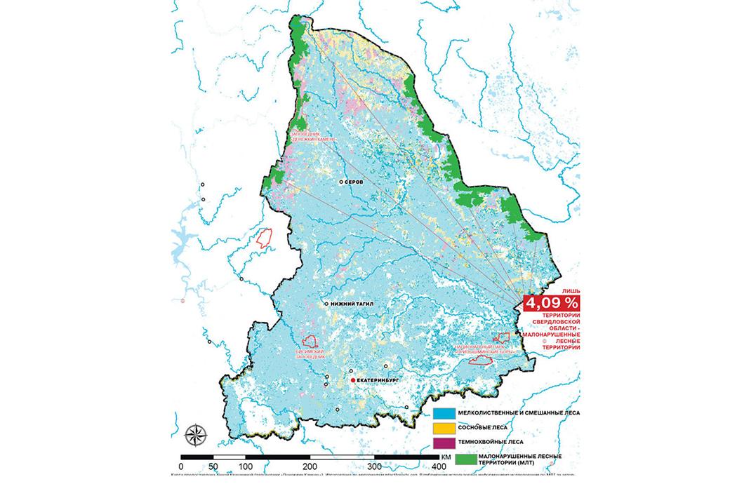 Малонарушенных лесов в Свердловской области осталось всего 4%