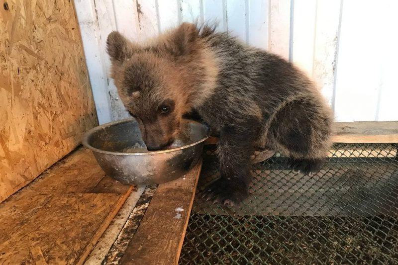 медвежонок Чебаркуль