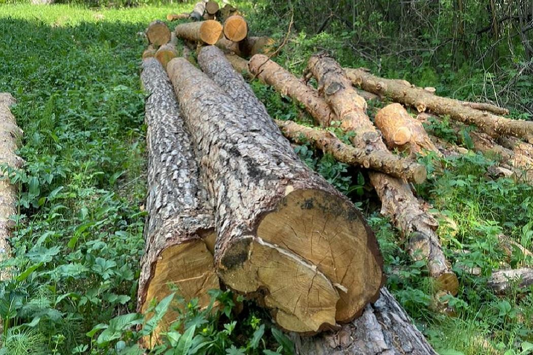 Лес + рубка леса + вырубка леса