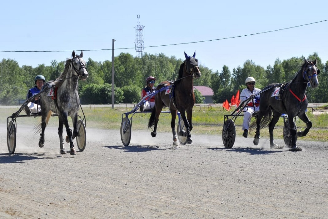 Лошади + наездники + скачки + заезд + конный спорт