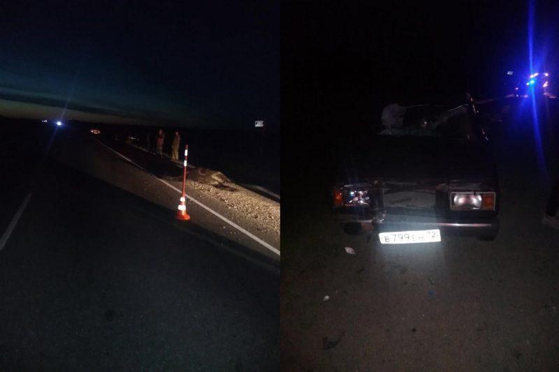 На тюменской трассе водитель «семерки» сбил лошадь 1
