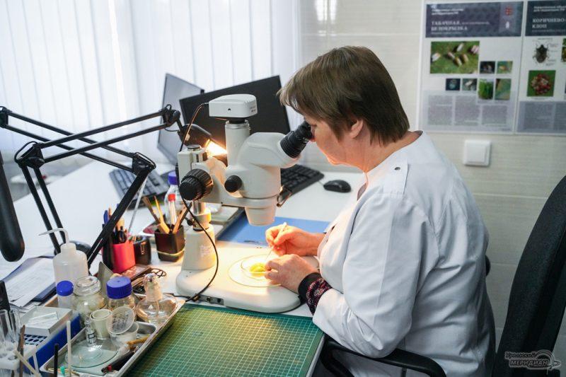 Tamozhnya Rosselhoznadzor laboratoriya ovoschi perets 21