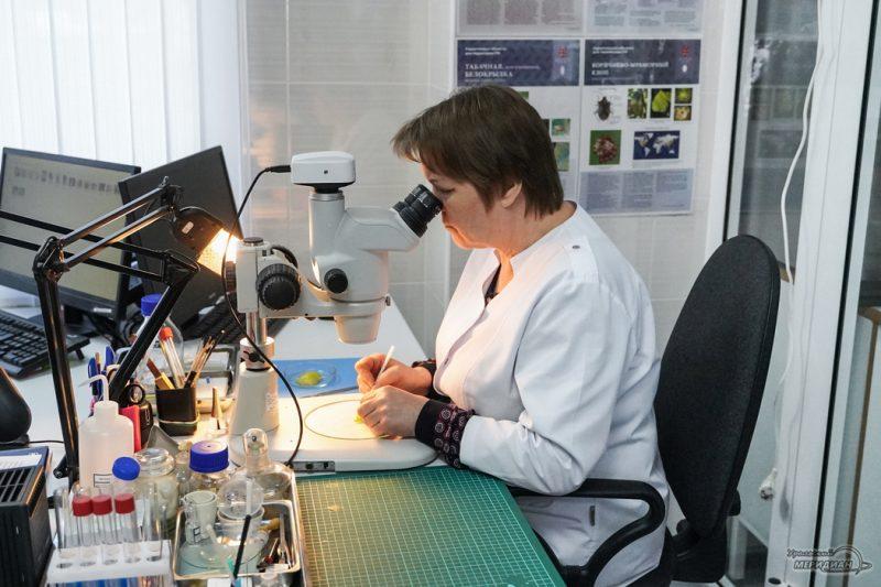 Tamozhnya Rosselhoznadzor laboratoriya ovoschi perets 26