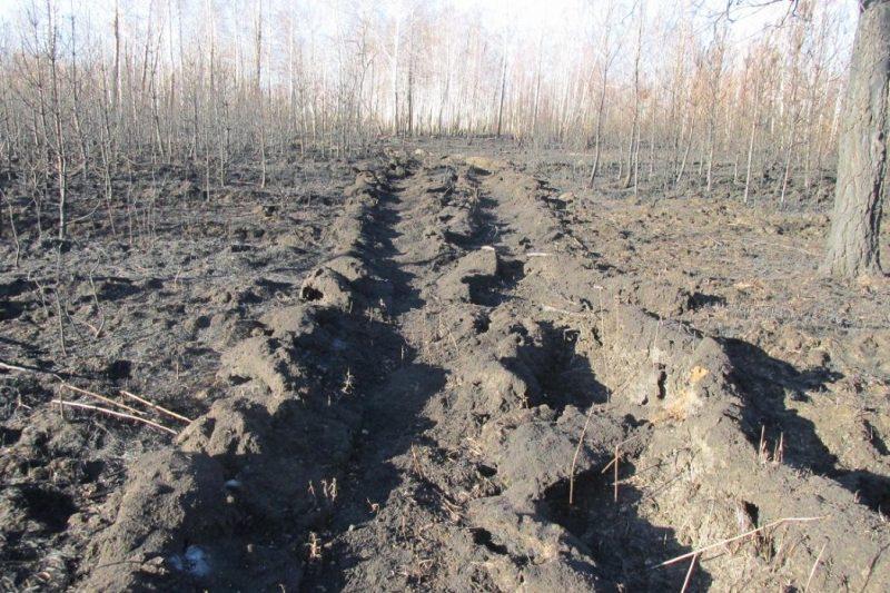 В Тюменской области осудили грибника, устроившего два лесных пожара