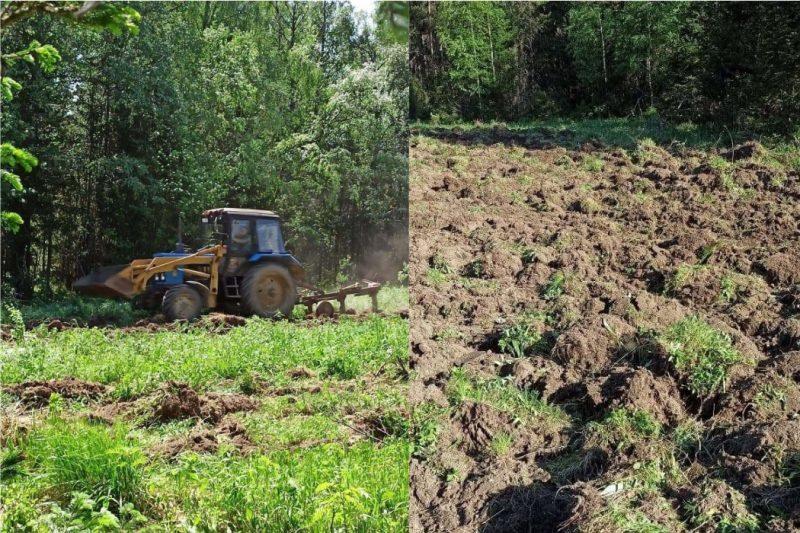 В нацпарке Таганай появилось 6 полей с овсом для животных