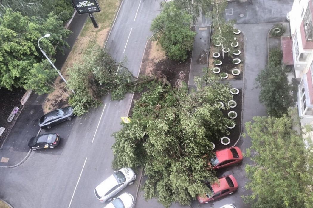 Ночью в Екатеринбурге из-за мощного шторма повалило деревья