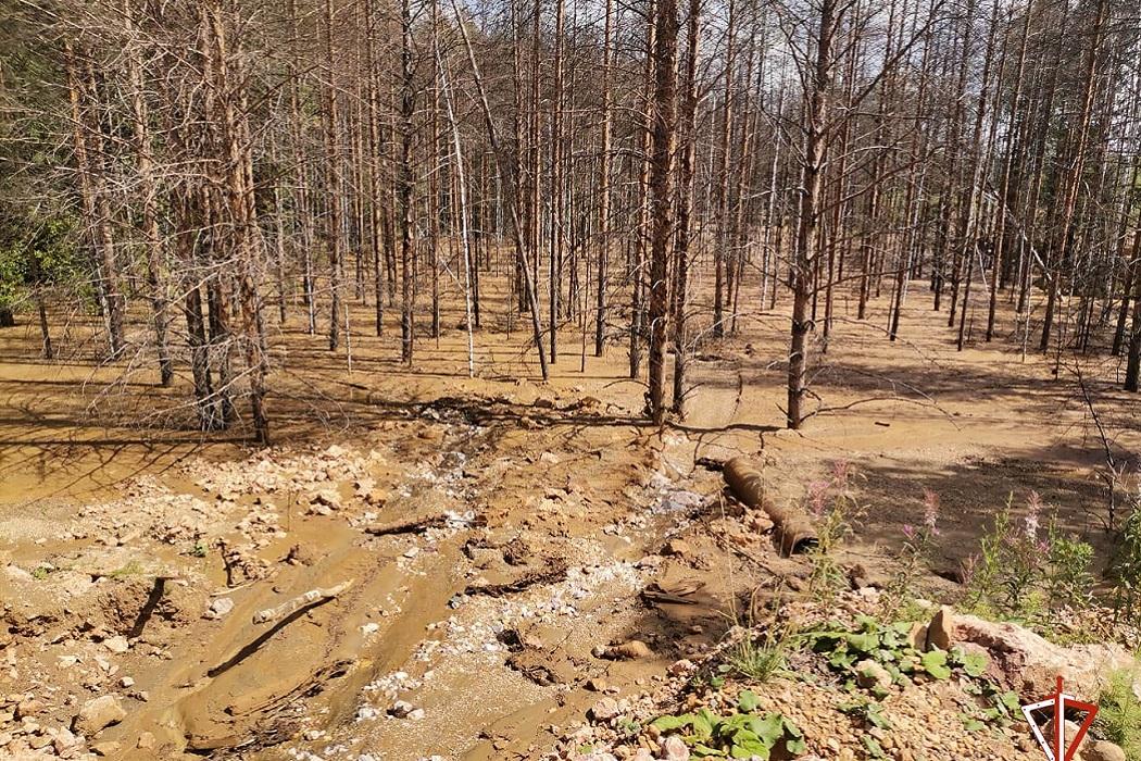 17 незаконных золотодобытчиков задержаны Росгвардией и ФСБ на Урале