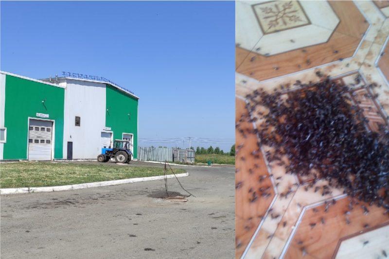 Из-за нашествия мух в Муслюмово проверили южноуральскую птицефабрику