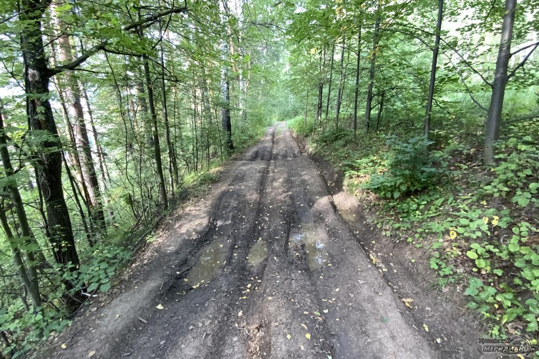 Лес дорога