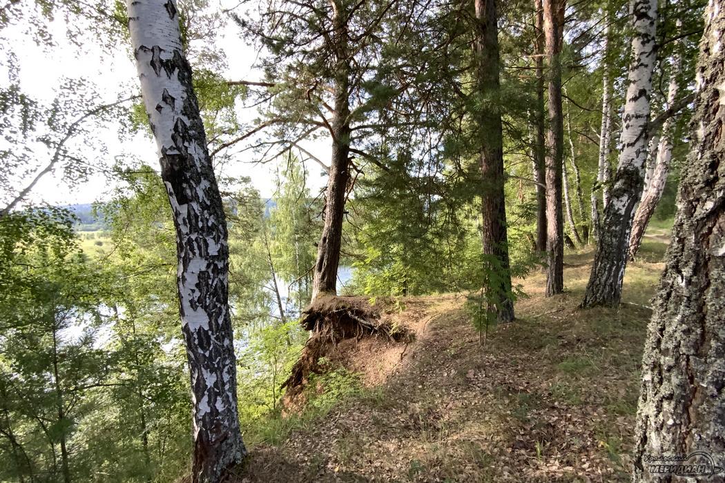 Лес природа