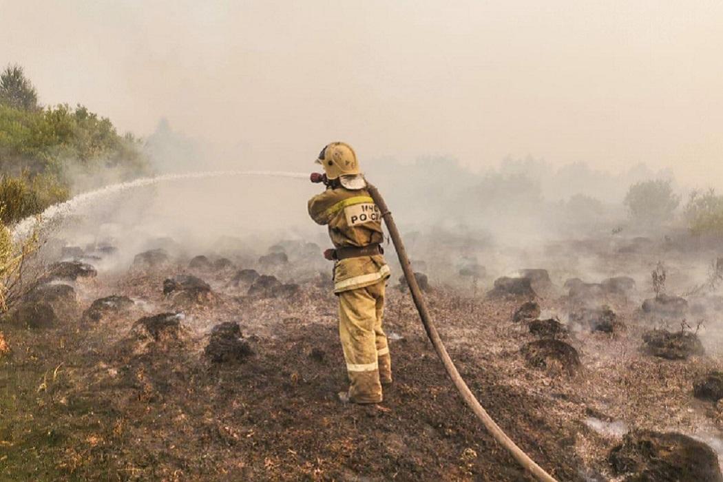 Пожарный + пожарный шланг + тушение пожара + природный пожар + лес горит + дым