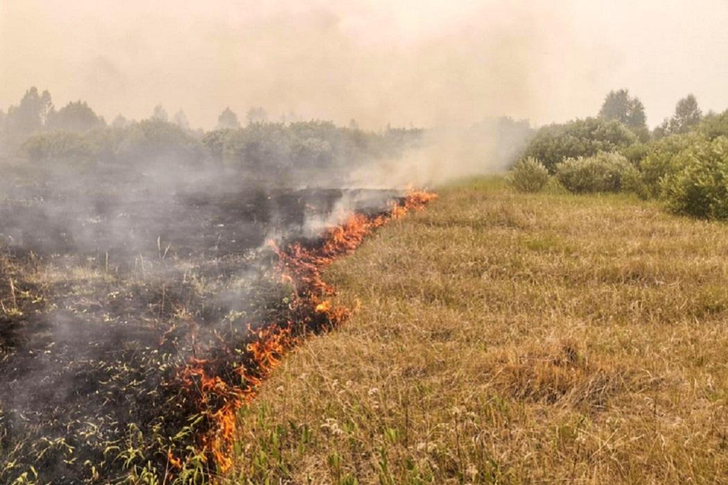 Сухая трава + трава + пожар + трава горит + дым + дым от пожара