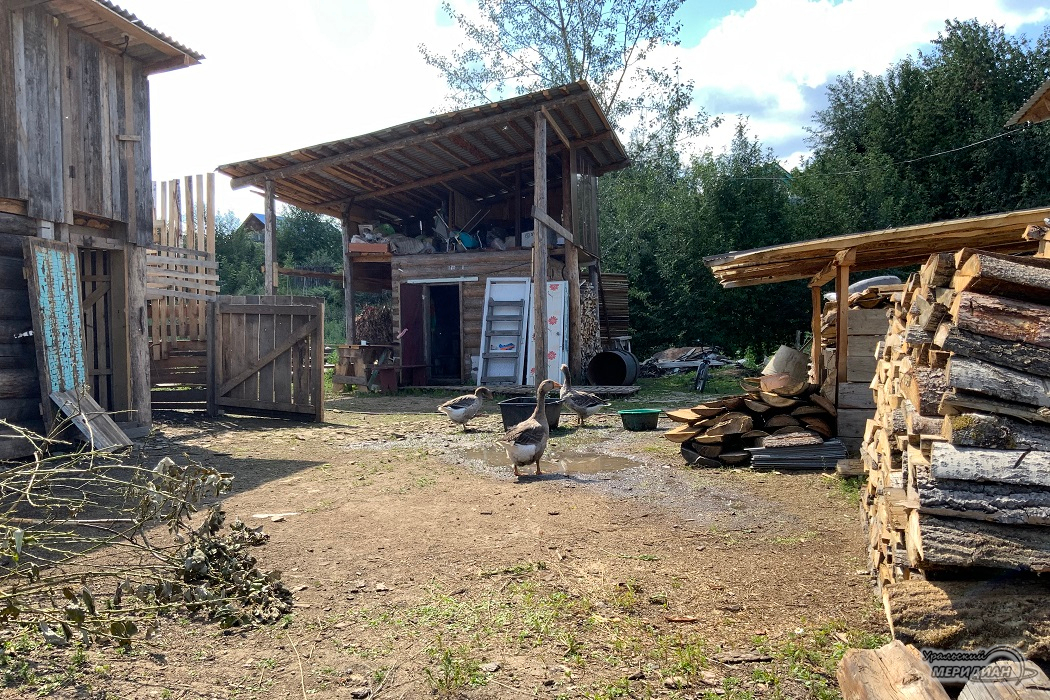 гуси утки птица деревня село