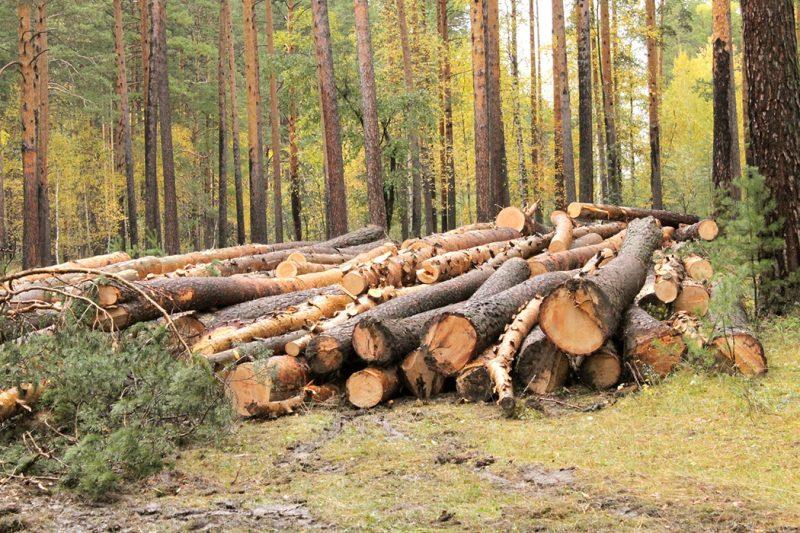 лес, вырубка