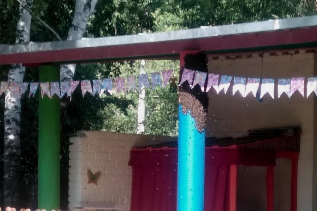 Улий ос в миасском детском саду