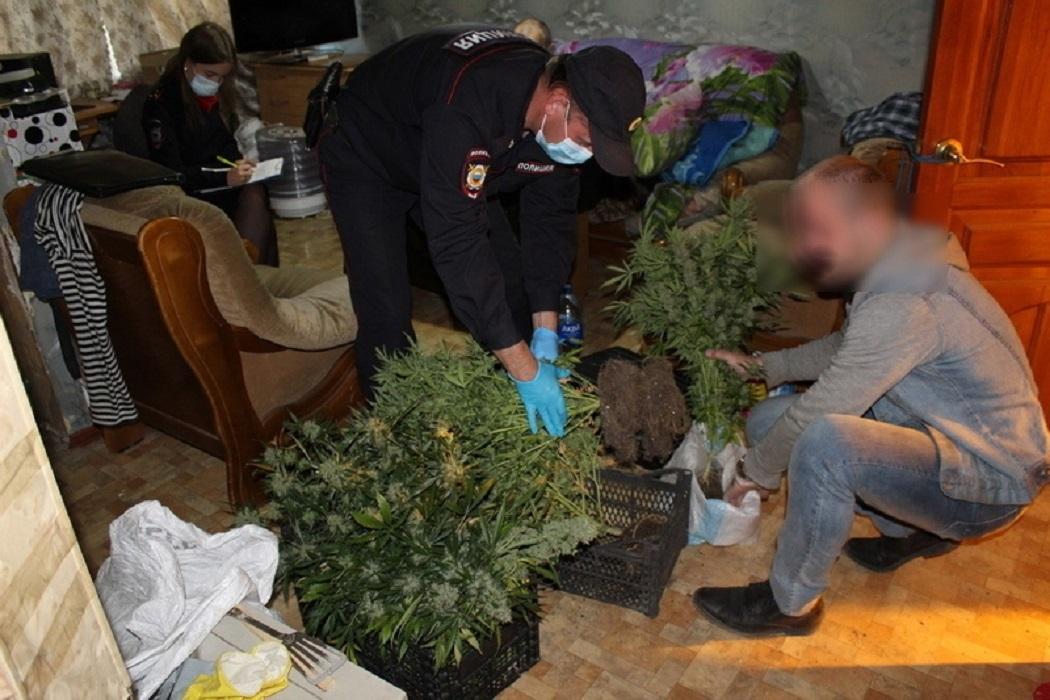В квартире 61-летнего тагильчанина полицейские нашли 36 кустов конопли