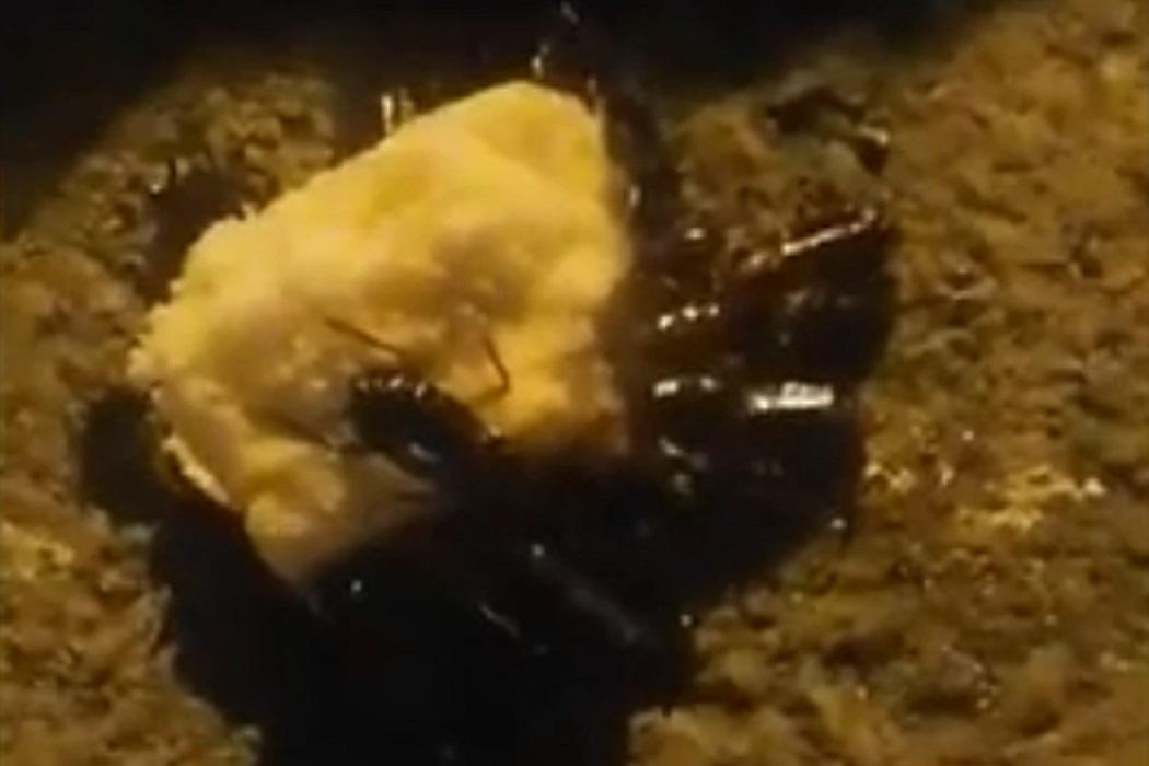 Огромные рыжие тараканы напугали жителей Первоуральска