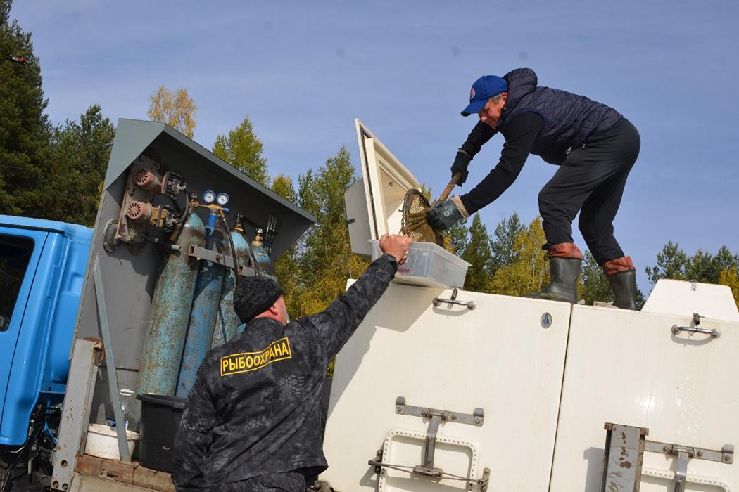 «Святогор» выпустил в северные водоёмы Свердловской области более 16 тысяч мальков