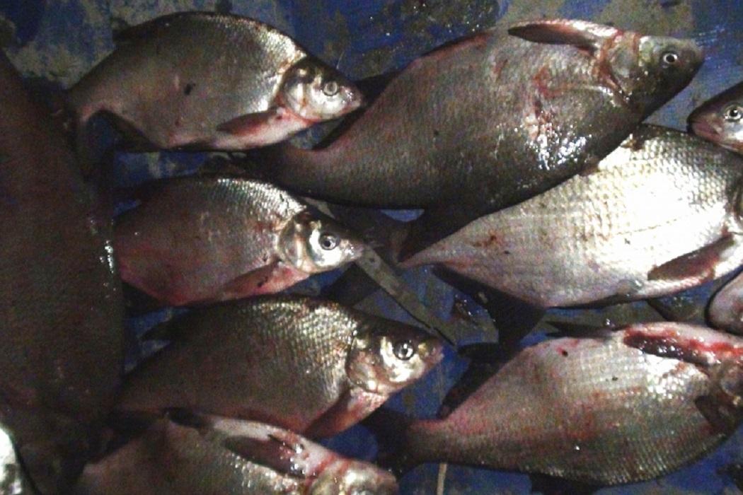 Браконьеру из Тобольска грозит срок за вылов рыбы в нерестовый период