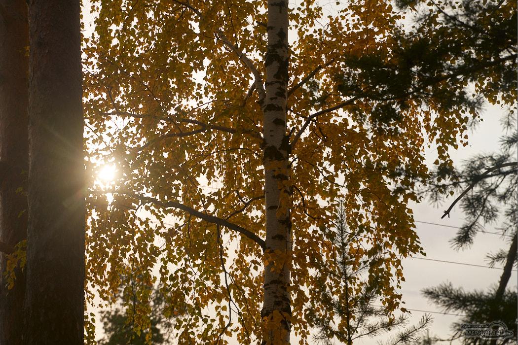 Ещё до 1 октября на Урал пришла тёплая и золотая осень