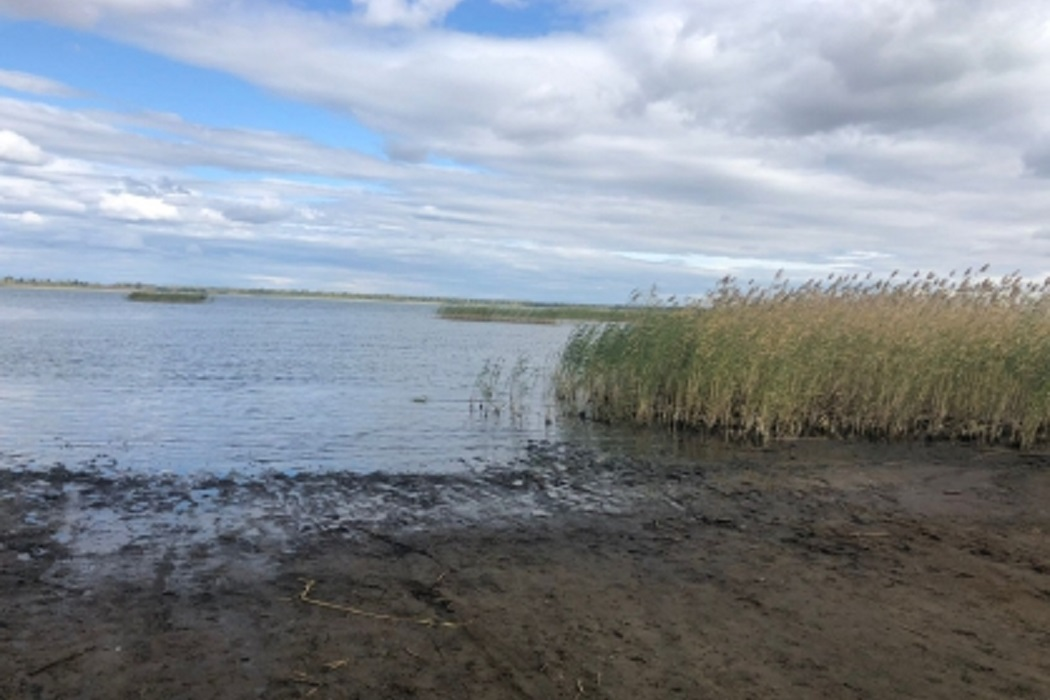 Озеро + водоём + утонул + река + вода + камыши + берег + купание