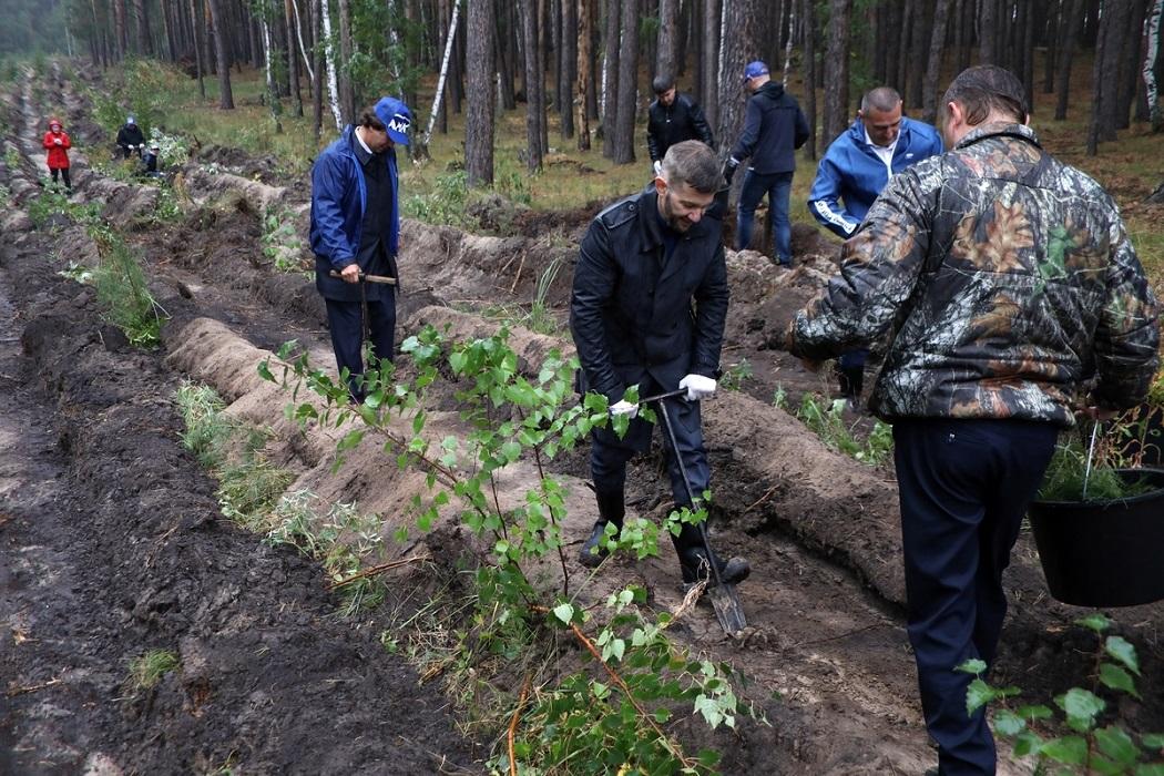Посадка леса + высадка леса + саженцы + люди сажают деревья + сосны + сосенки + лесополоса + посадка + высадка