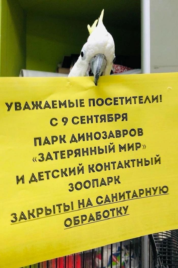 В Челябинском зоопарке опасаются вспышки птичьего гриппа
