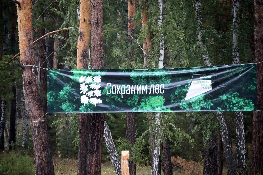 Сохраним лес + лес + деревья