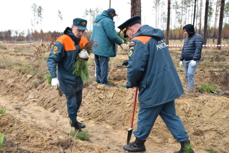 Тюменские пожарные приняли участие во всероссийской акции Сохраним лес