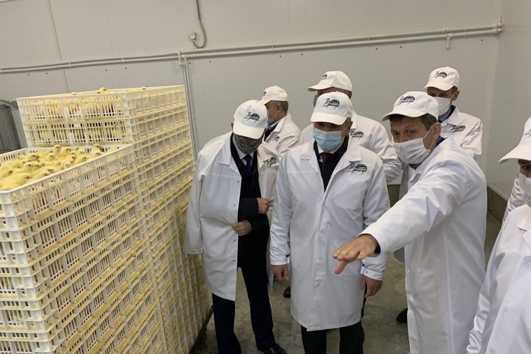 В Тюменской области открыли комплекс по выращиванию и переработке бройлеров
