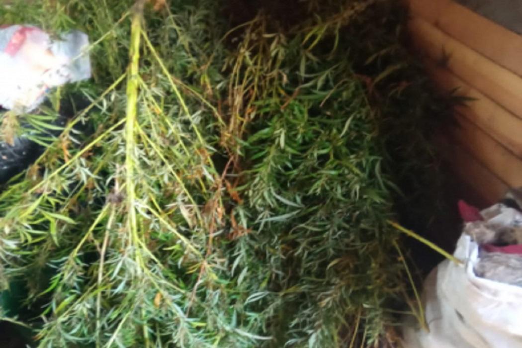 В Притобольном районе задержали мужчину с 2 килограммами марихуаны