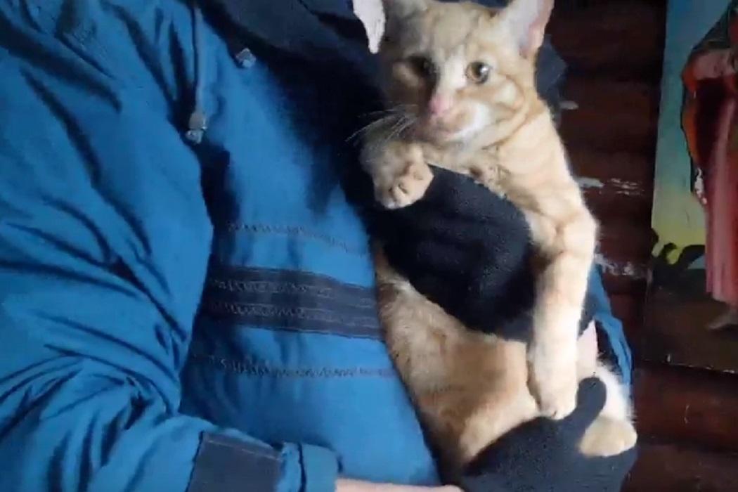 В Екатеринбурге зооспасатели сняли кота с сосны у храма Космы Верхотурского