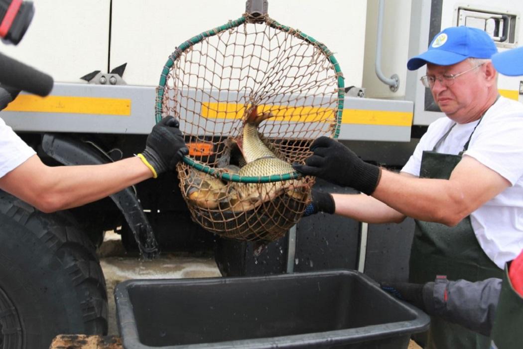 Для очистки воды в Тагильский пруд выпустили 3,3 тысячи рыб-мелиораторов