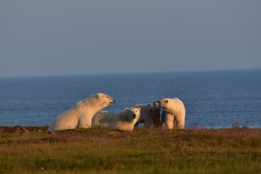 Национальному парку «Гыданский» на Ямале исполнилось 25 лет