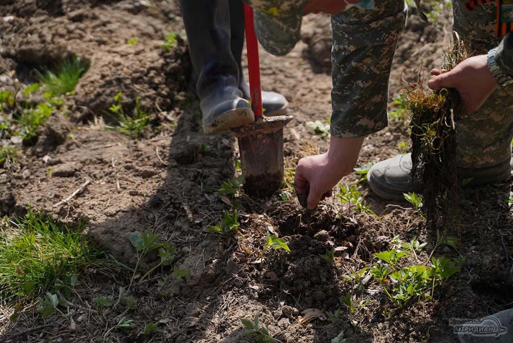 Акция сад памяти лес посадка