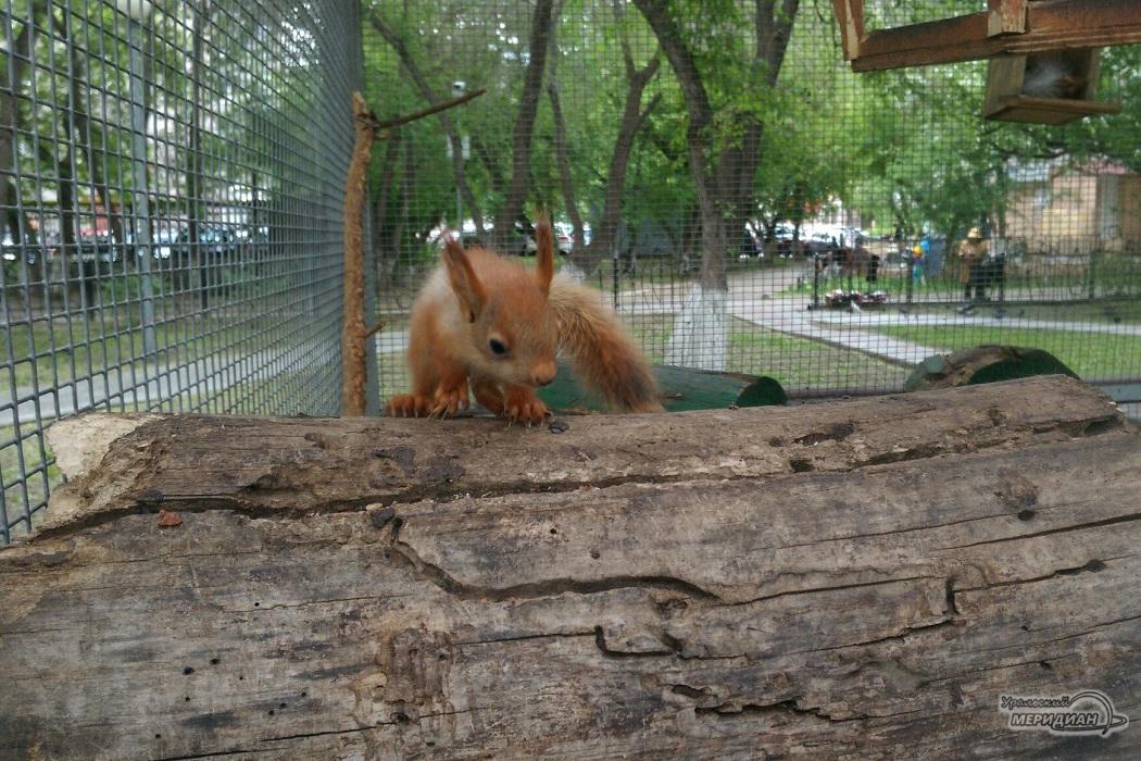 Белка зоопарк