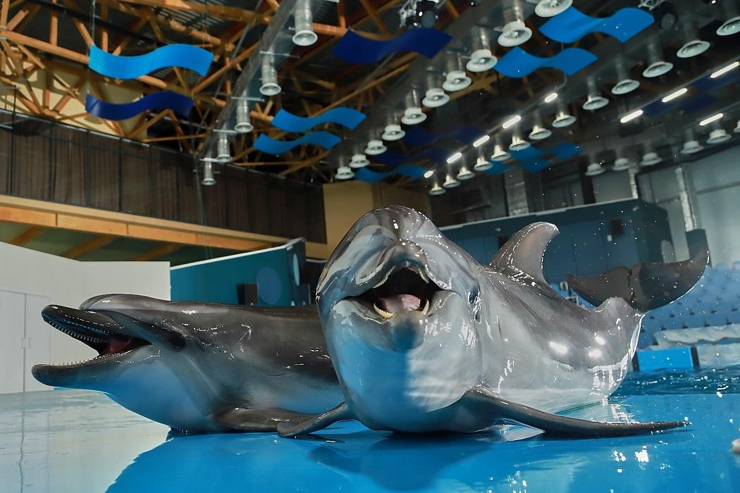 Дельфин в океанариуме